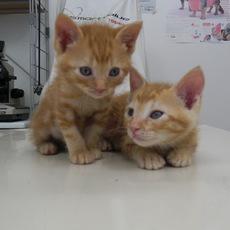 2人とも元気な男の子です 病院では猫をかぶっておとなしかったです